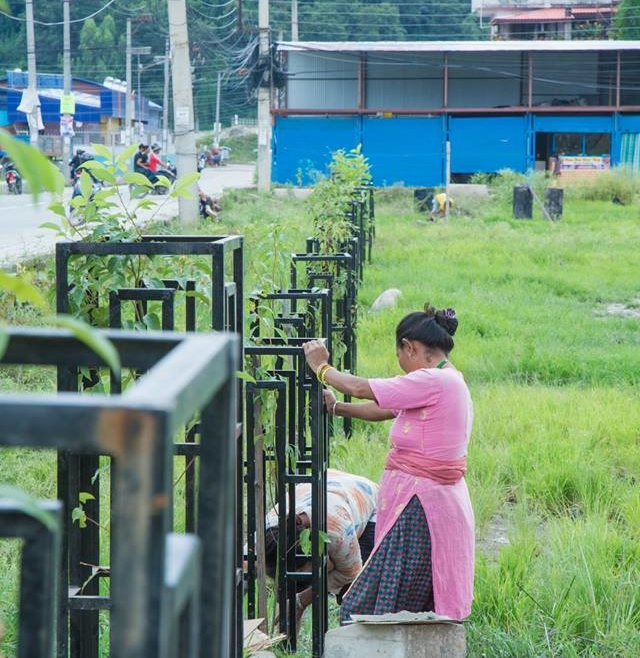 Tree plantation: A love letter to city